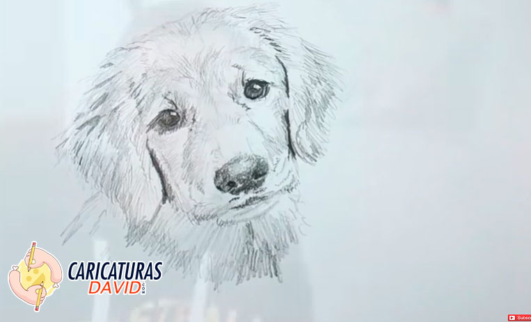 Cómo Dibujar Un Perro A Lápiz Paso A Paso Fácil