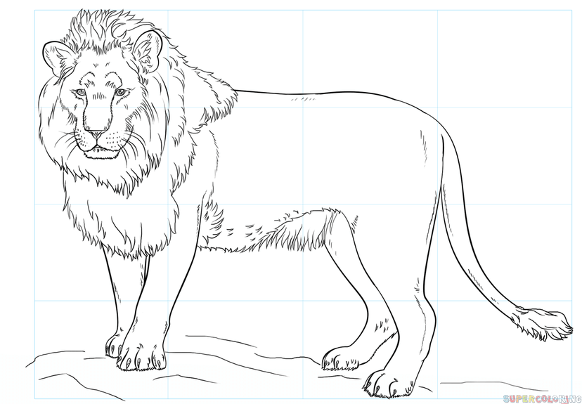 como dibujar un leon